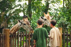 dierentuin_PuurdePeel